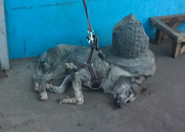 The Philippine Animal Welfare Society   PAWS   Animal