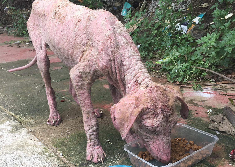 The Philippine Animal Welfare Society | PAWS | Animal