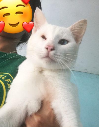 Adopt-Chino-4