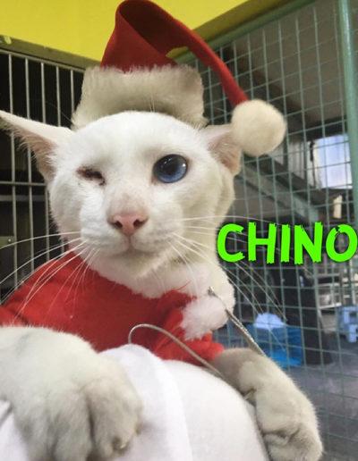 Adopt-Chino-7