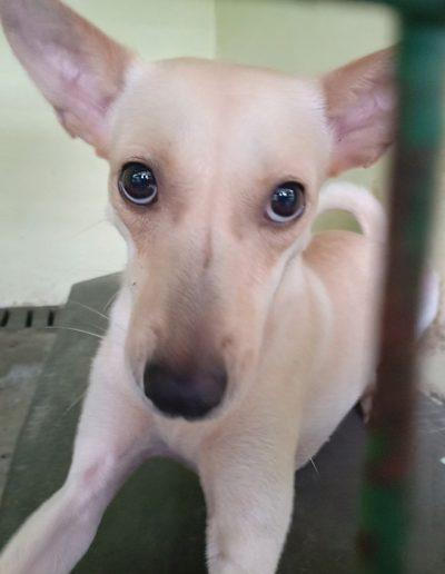 Adopt-Chloe-5