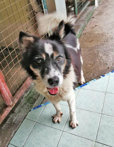 Adopt-Dexter-4