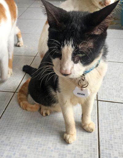 Adopt-Kevin-2